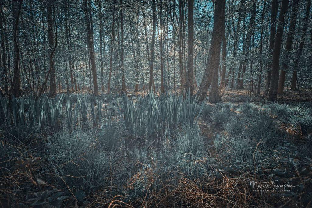Landschaft & Natur 48