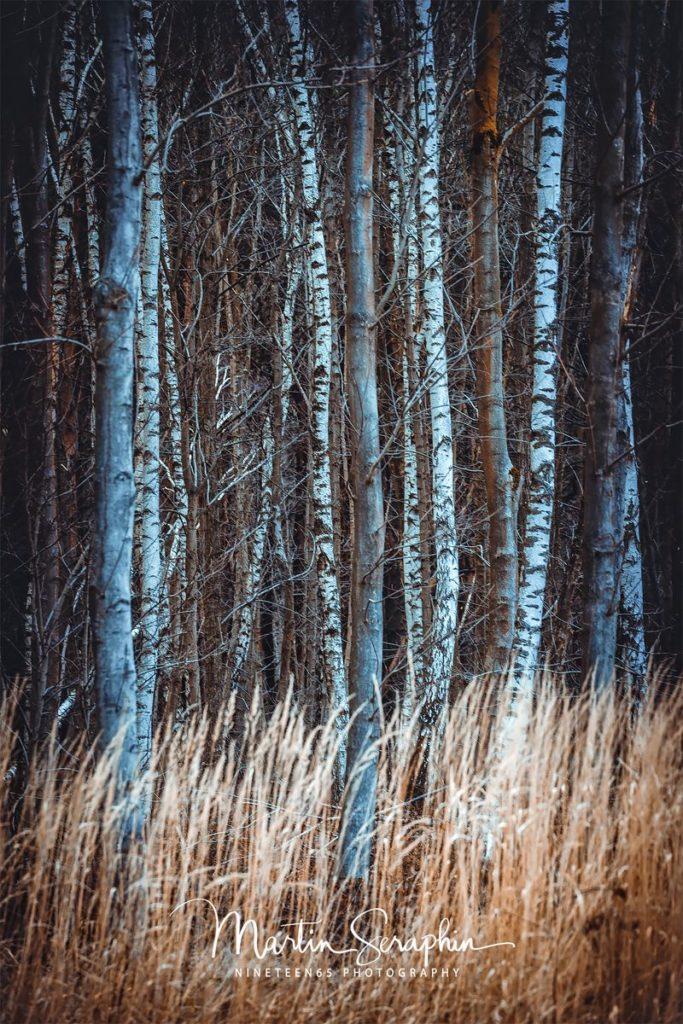 Landschaft & Natur 117