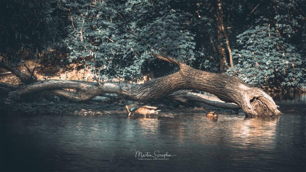 Landschaft & Natur 70
