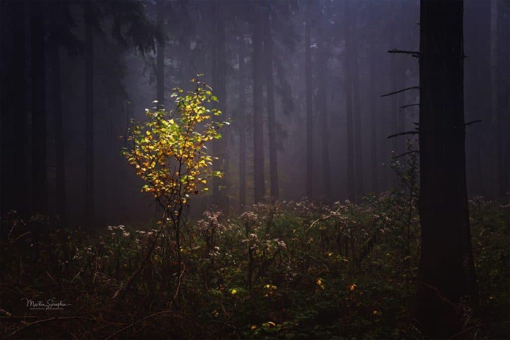 Landschaft & Natur 1