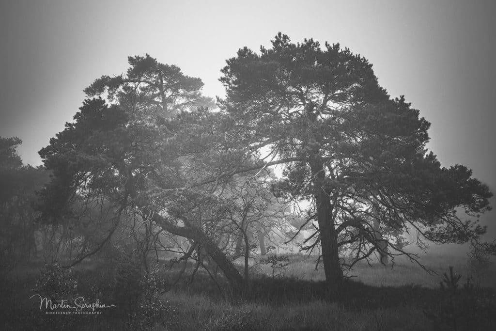 Landschaft & Natur 113
