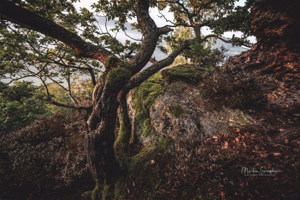 Landschaft & Natur 10