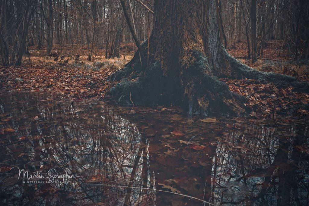 Landschaft & Natur 108