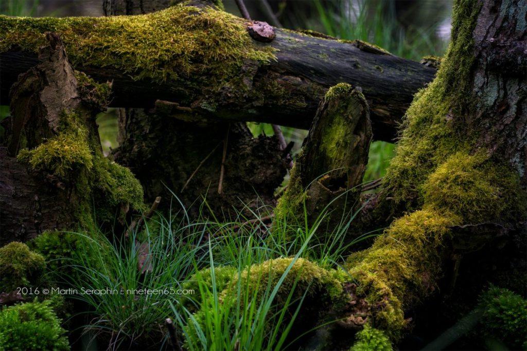 Landschaft & Natur 8