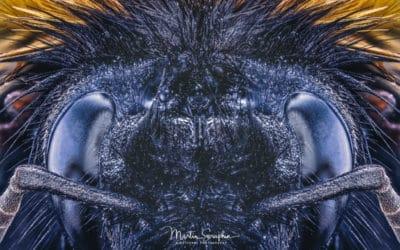 Makrofotografie – Dank COVID-19